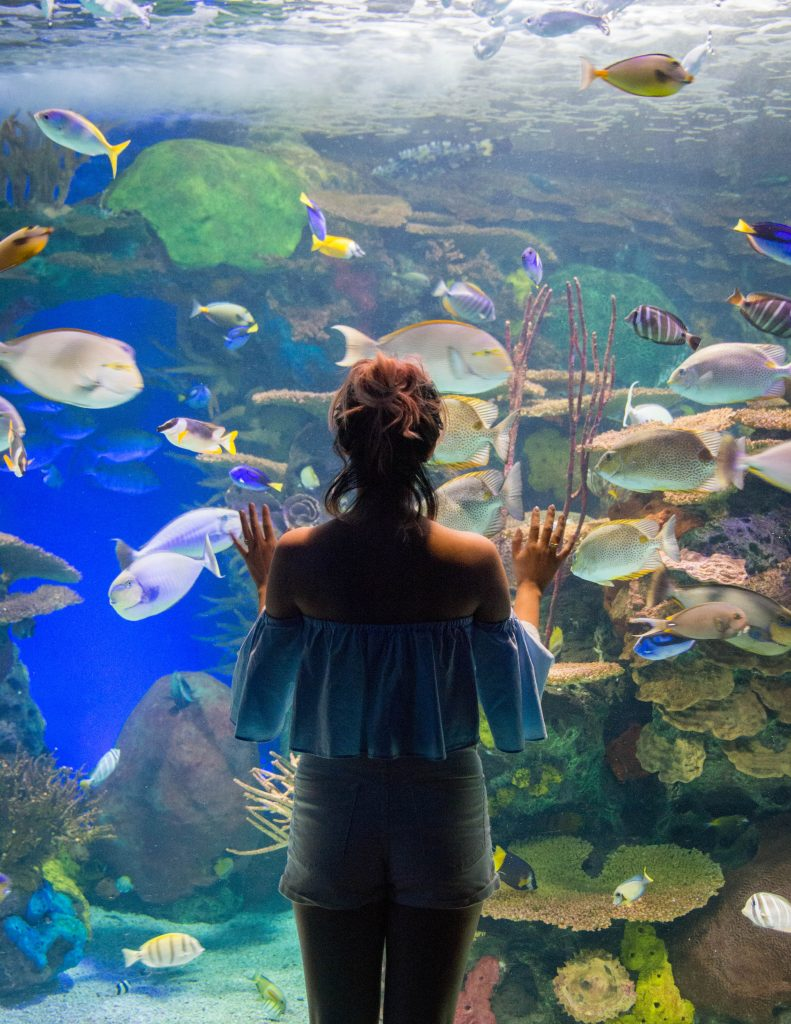 Ripley's Aquarium of Canada Toronto travel Montreal lifestyle beauty fashion blog