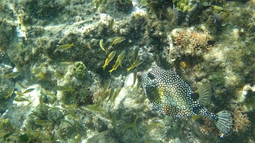 tiny fish spotted fish Westin snorkelling Cozumel Mexico travel Montreal lifestyle blog