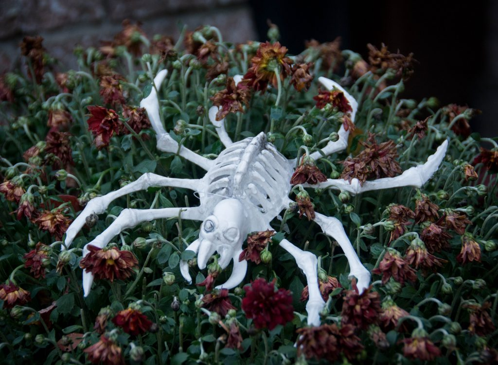 spider skeleton outdoor Halloween decor Montreal lifestyle blog