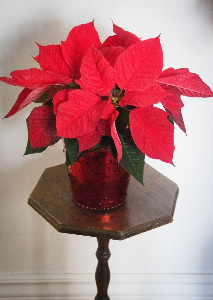 pointsettia last minute Christmas holiday gift guide Montreal lifestyle beauty fashion blog